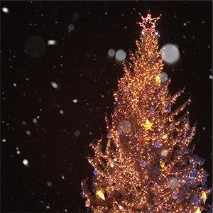 クリスマスイルミネーションガーデン